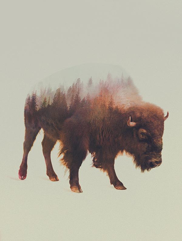 Andreas Lie, Norwegian woods: Bison, doppia esposizione digitale