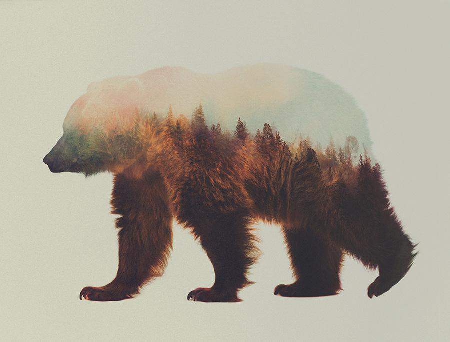 Andreas Lie, Norwegian woods: The Brown Bear, doppia esposizione digitale