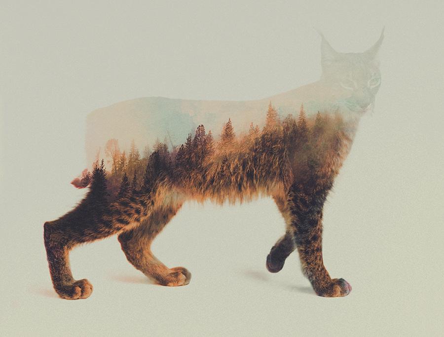 Andreas Lie, Norwegian woods: The Lynx, doppia esposizione digitale
