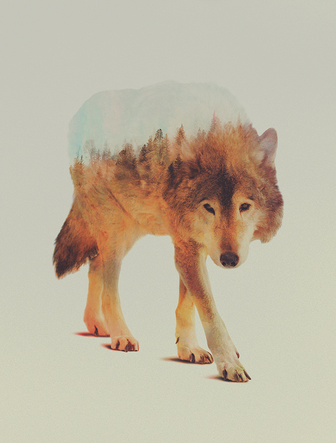 Andreas Lie, Norwegian woods: Wolf In The Woods 2, doppia esposizione digitale
