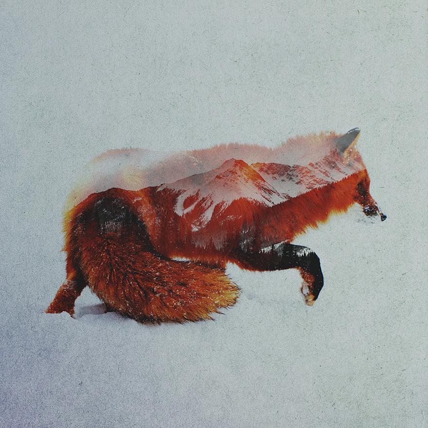 Andreas Lie, The North: Fox, doppia esposizione digitale