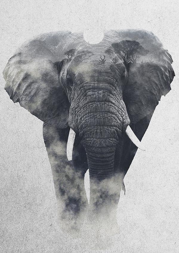 Andreas Lie, Africa: Elephant, doppia esposizione digitale