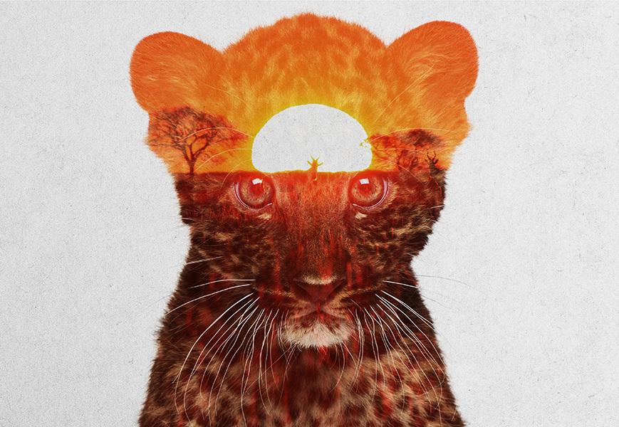 Andreas Lie, Africa: Leopard cub, doppia esposizione digitale
